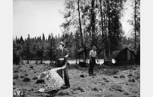 Rauni Ikäheimo, Kaarlo Halttunen ja Esko Vettenranta.